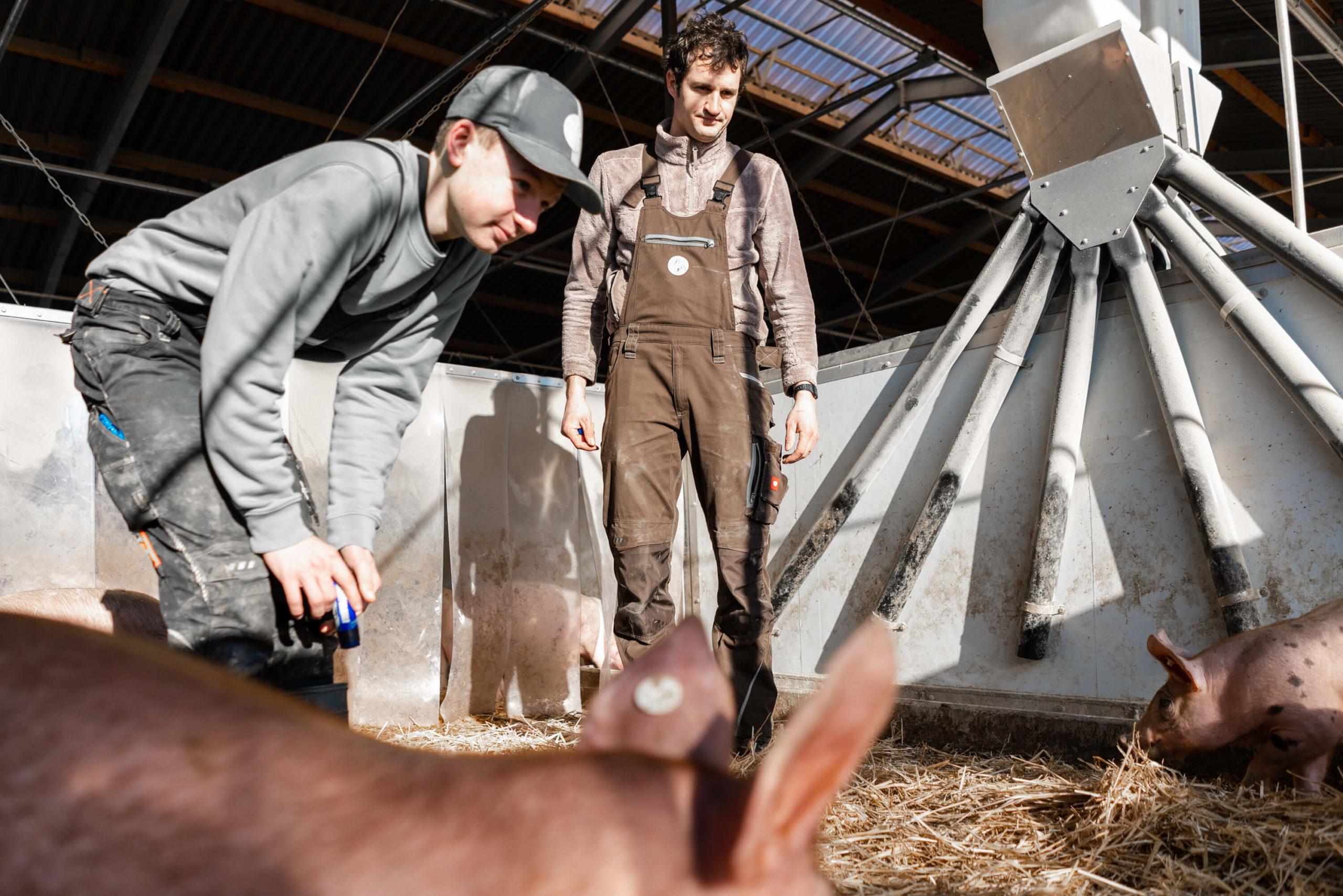 Ausbildungsbetrieb | Niederrheiner Strohschwein