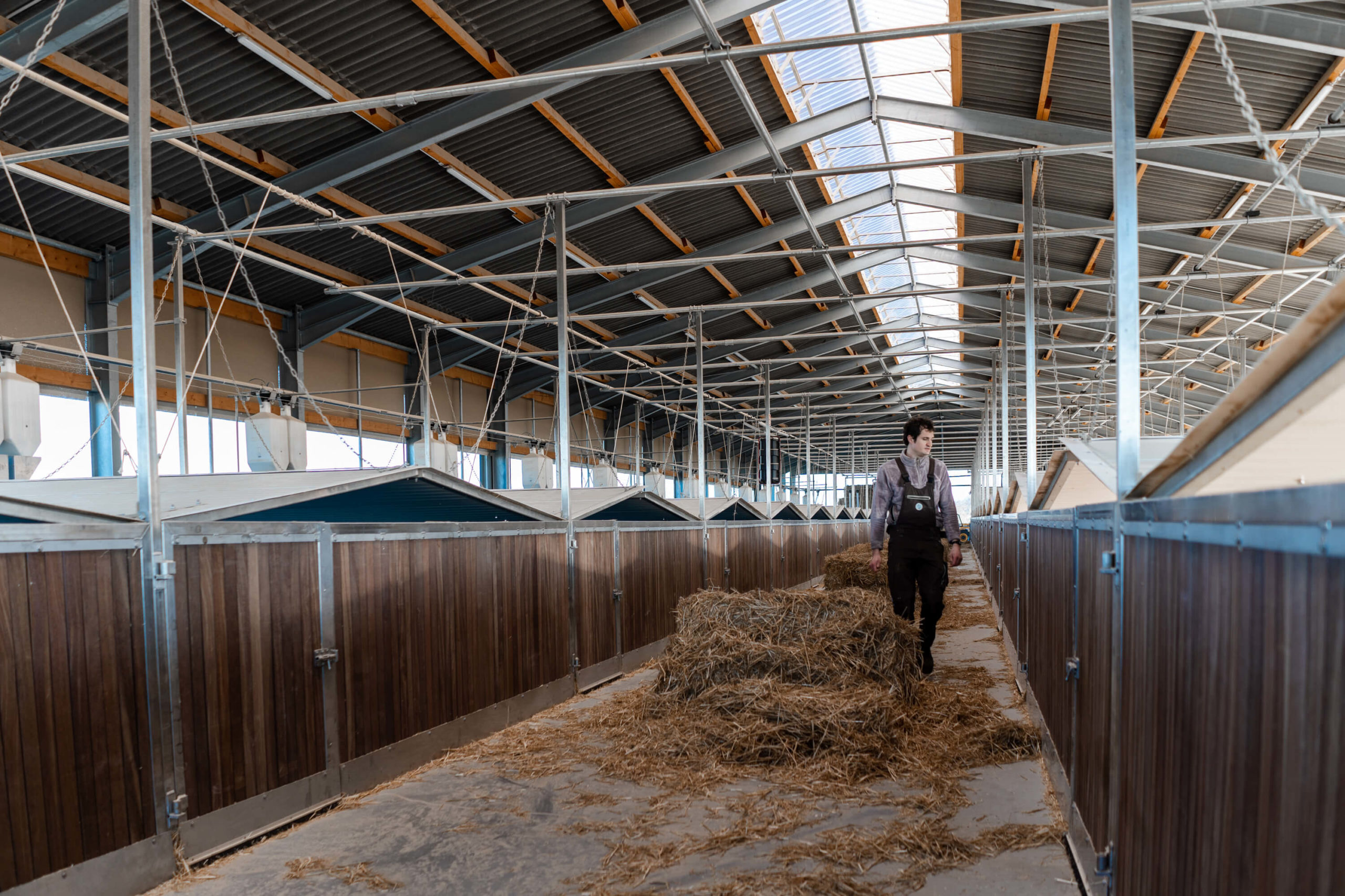 Hüttenhaltung von Schweinen | Niederrheiner Strohschwein
